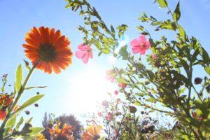 Wie lange gilt es eine direkte Sonneneinstrahlung nach einer Hyaluronsäure Behandlung zu meiden?