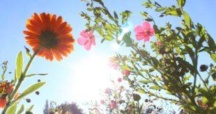 Wie lange nicht in die Sonne nach einer Hyaluronbehandlung?